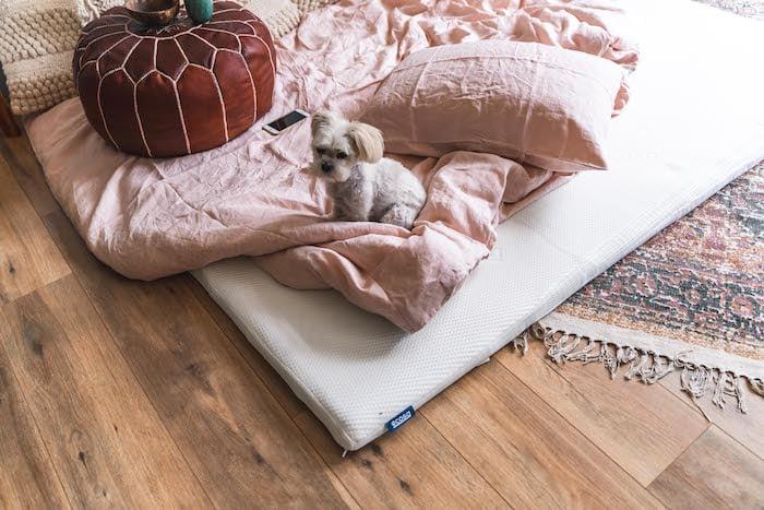 MishAndKirk's dog on the Ecosa mattress