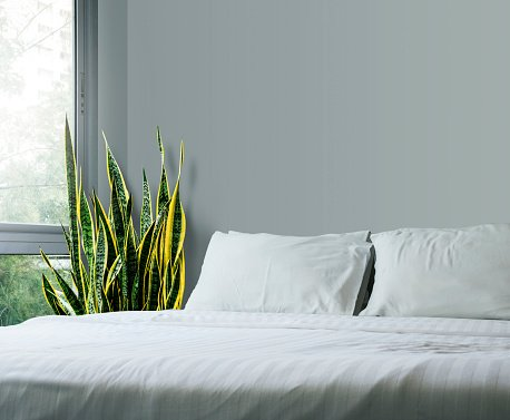 Are Plants Ok In The Bedroom